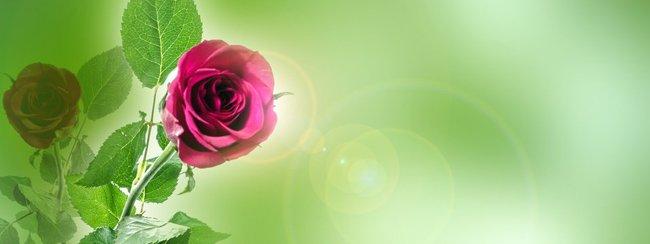 roseslight